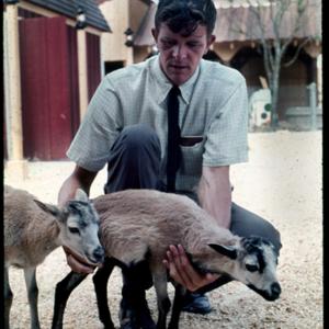 Photograph, Petting Zoo